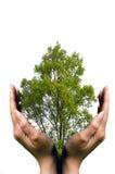 Manos que protegen un árbol Imagen de archivo libre de regalías