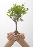 Manos que sostienen el árbol imagen de archivo