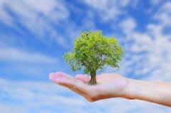 Manos que sostienen el árbol con el fondo removido las rebabas del cielo azul Fotografía de archivo