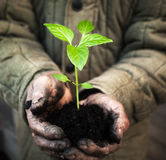 Manos que sostienen el árbol joven verde con el suelo Foto de archivo libre de regalías