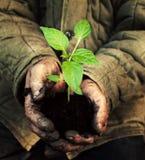 Manos que sostienen el árbol joven verde con el suelo Imagenes de archivo