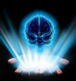 Manos que sostienen el cerebro Fotografía de archivo