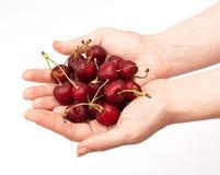 Manos que sostienen la cereza roja Imagen de archivo