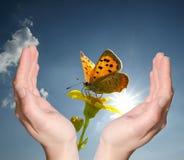 Manos que sostienen la mariposa de la flor Imagenes de archivo