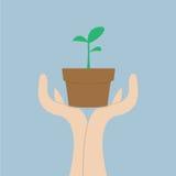 Manos que sostienen la pequeña planta, concepto del crecimiento Imagen de archivo