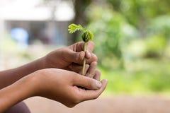 Manos que sostienen la plántula Concepto de la ecología Imagen de archivo libre de regalías