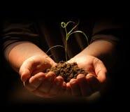 Manos que sostienen la planta de semillero Imagenes de archivo