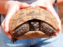 Manos que sostienen la tortuga Foto de archivo libre de regalías