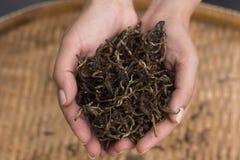 manos que sostienen las hojas de té secas Fotografía de archivo