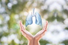 Manos que sostienen los pulmones humanos Fotografía de archivo libre de regalías