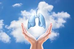 Manos que sostienen los pulmones humanos Fotos de archivo libres de regalías