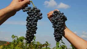 Manos que sostienen un manojo de uvas contra el cielo azul Fotos de archivo