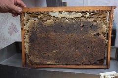 Manos que sostienen un peine de la miel Fotos de archivo