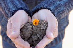Manos que sostienen una pequeña flor hermosa Foto de archivo libre de regalías