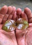 Manos que sostienen una planta Imagen de archivo libre de regalías