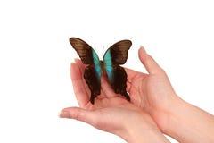 Manos release/versión la mariposa exótica imagen de archivo libre de regalías