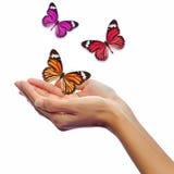 Manos release/versión mariposas imagenes de archivo
