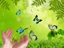 Manos release/versión mariposas exóticas. fotografía de archivo libre de regalías