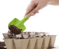 Manos usando la pala que coloca el suelo en los crisoles del estiércol vegetal Imagen de archivo