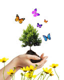 Manos y árbol Imágenes de archivo libres de regalías