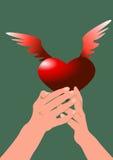 Manos y corazón Imagenes de archivo
