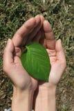 Manos y hoja verde imagen de archivo