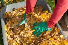 Manos y hojas Fotografía de archivo