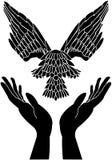 Manos y paloma que cuidan en vuelo Fotos de archivo