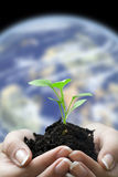 Manos y planta de semillero Imágenes de archivo libres de regalías