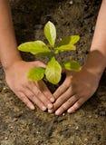 Manos y planta de tierra del árbol Fotografía de archivo libre de regalías