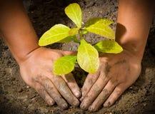 Manos y planta de tierra del árbol Imagen de archivo libre de regalías