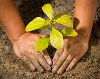 Manos y planta de tierra del árbol Imagen de archivo