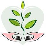 Manos y planta en fondo del corazón Imagen de archivo libre de regalías