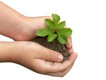 Manos y plantas Imagen de archivo libre de regalías