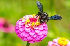 Manosee el funcionamiento de la abeja Imagen de archivo
