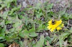 Manosee el otoño de la abeja Fotografía de archivo libre de regalías