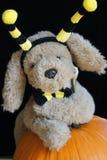 Manosee el perrito de la abeja Foto de archivo libre de regalías