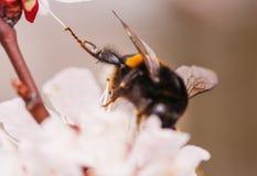 Manosee el pie cogido en la flor Fotografía de archivo libre de regalías