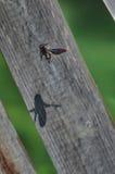Manosee el vuelo de la abeja Imagenes de archivo