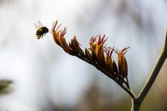 Manosee el wee de la abeja Foto de archivo