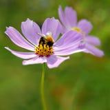 Manosee en las flores Imagen de archivo