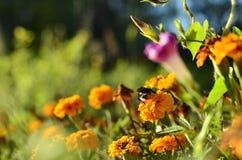 Manosee en las flores fotografía de archivo