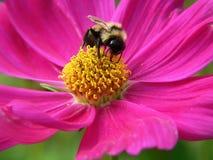 Manosee la abeja Fotografía de archivo