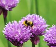 Manosee la abeja Fotos de archivo