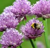 Manosee la abeja Imagen de archivo libre de regalías
