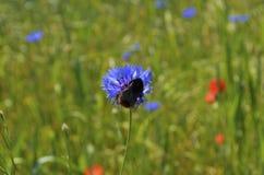 Manosee la abeja en aciano Fotografía de archivo