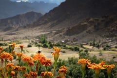 Manosee la abeja en la flor anaranjada Foto de archivo