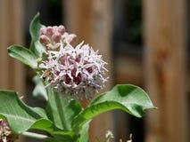 Manosee la abeja en las flores Imágenes de archivo libres de regalías