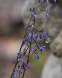 Manosee la abeja en las flores de OurBlue Fotos de archivo libres de regalías