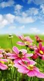 Manosee la abeja en las flores del resorte Imagen de archivo libre de regalías